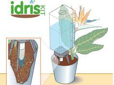 Piante da interno - Claber Irrigazione Piante