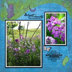 Local wild flowers