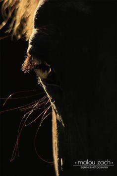 Equine Photography No2 —light by Malou Zach, via Behance