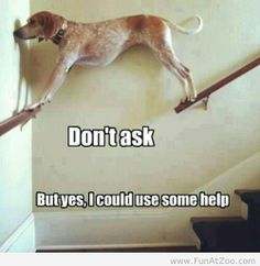 I feel like this would be me if I was a dog...