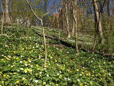 http://inredningsvis.se/botaniska-tradgarden-i-goteborg/ Botaniska trädgården i Göteborg