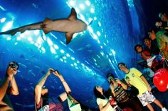 Dubai Mall Aquarium (Emiratos Árabes Unidos).