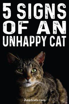 How happy is your cat?
