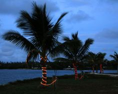 Daily Photo – December 15, 2015 Palm trees at Settlement Point during the Festival of Lights - Green Turtle Cay, Abaco, Bahamas.