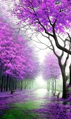Welcome to the community of fans Pictures nature Beautiful World, Beautiful Gardens, Beautiful Images, Beautiful Landscape Wallpaper, Beautiful Landscapes, Landscape Photography, Nature Photography, Pink Nature, Autumn Scenery