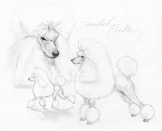 Image result for poodle drawing