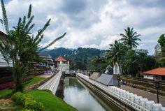 In diesem Guide zeige ich dir die Highlights rund um und in Kandy im Hochland Sri Lankas - Tempel, Boots Safaris und Teeplantagen.