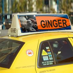 Famous ginger on a taxi