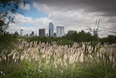 Foto of the Week from Buenos Aires:  The Ecological Reserve
