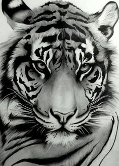 Draw Tigers My tattoo ~ Sumatran Tiger by ~artistelllie - Art Tigre, Tattoo Drawings, Art Drawings, Drawing Art, Drawing Ideas, Drawings Of Tigers, Art Sketches, Drawing Poses, Tattoo Ink