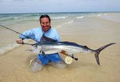 Image result for marlin fishing images