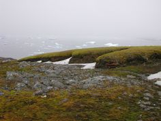 Moss brought back to life after 1,500 years frozen in ice