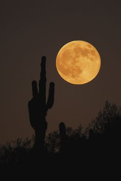 serendipity0901:    Moon Rise Phoenix, Arizona