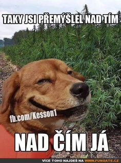 You also thought about that .- Taky jsi přemýšlel nad tím… You also thought about that … - Good Jokes, Funny Jokes, Jokes Quotes, Memes, Pranks, Cool Words, Funny Animals, Haha, Comedy