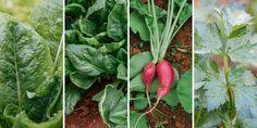 Νόστιμα και υγιεινά λαχανικά που μπορούμε να φυτέψουμε αυτή την περίοδο σε κήπο και σε γλάστρα στο μπαλκόνι χωρίς να χρειάζονται ιδιαίτερη φροντίδα. Gardening, Stuffed Peppers, Vegetables, Food, Lawn And Garden, Stuffed Pepper, Essen, Vegetable Recipes, Meals
