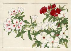 Tanigami Konan (1879 - 1928): Godetia, 1917