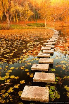 Stepping stones on a pond in autumn.