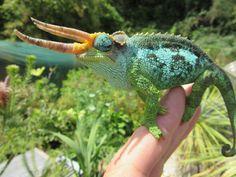 This jacksons chameleon has huge horns! (Trioceros jacksonii merumontanus). Credit: Van Overbeke Jurgen > For more pics videos & articles visit: herpkeepers.com jacksonii s s s pets lovers etology s