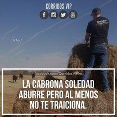 No te traiciona  ____________________ #teamcorridosvip #corridosvip #corridosybanda #corridos #quotes #regionalmexicano #frasesvip #promotion #promo #corridosgram http://ift.tt/1TLfVkg - http://ift.tt/1HQJd81