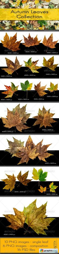Autumn Leaves Collection 5697592
