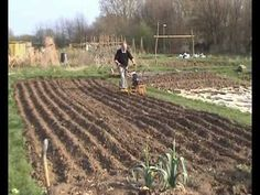Part 1 of Seed to Loaf: small plot grain growing on an allotment. Simple but thorough demonstration.