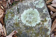 lichenrock.jpg (1846×1231)