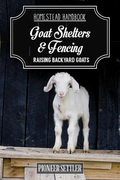 How To Build A Goat House | Homesteading Skills and Livestock Ideas by Pioneer Settler at http://pioneersettler.com/goat-house-raising-goats/