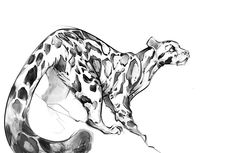 Animal Blog: Clouded leopard (+extra big tail)