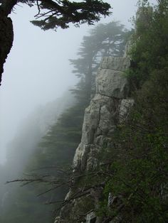 Tannourine cedar forest, Lebanon. 9 May 2009.