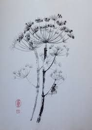 Image result for Queen Anne Lace wildflower abstract schetches graphics
