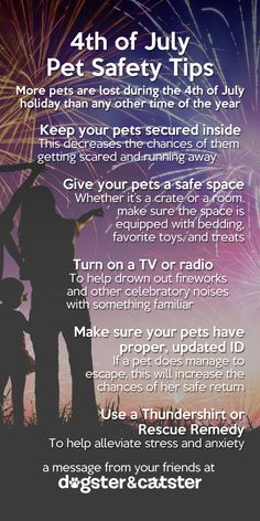 5 Ways to Keep Your Cat Calm This Fourth of July  Keep your cat/ dog calm this Fourth of July!!!!