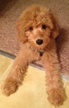 This puppy is hypnotizing me with it's cuteness... can't... look... away...