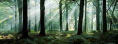 Wald - August Morning - Fototapete & Tapete - Photowall