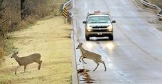 The One Thing You Should Do If You Hit A Deer