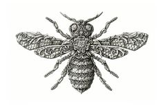 Little Wings is a series of intricate and beautifully-detailed illustrations about insects by Latvia-based graphic artist and illustrator Alex Konahin. Description from lostateminor.com. I searched for this on bing.com/images