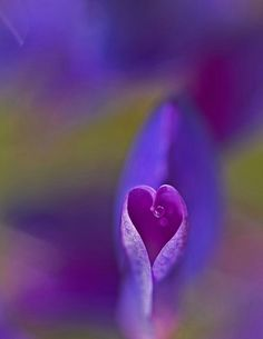Giving Up On Love, My Love, Simply Beautiful, Beautiful World, Heart Art, Heart Ring, Purple Passion Flower, I Love Heart, All Things Purple