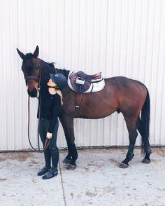 Gabby, an 18 year old Australian Jilly, a 7yo palomino QH/Arab rescue pony dressage - don't practice...