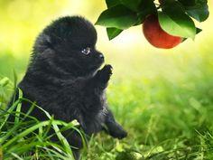 vVitamine für den Hund: Welche sind wichtig? — Bild: Shutterstock / gillmar    www.einfachtierisch.de