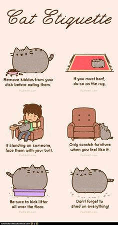 I think they pull each kitty aside in nursery school and hand them this list of cat rules.