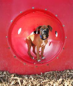 http://www.dogdaycareaustin.net/ #dog_spa #doggie_day_care #dog_daycare_austin #doggy_daycare_austin