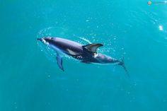 Nadando com Golfinhos na natureza