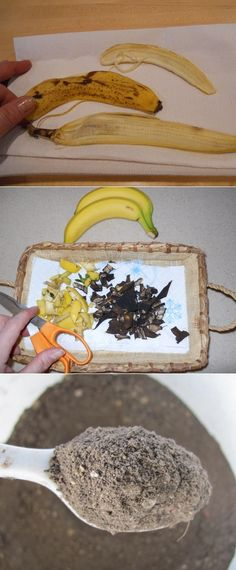 Dried Banana Peels as a Plant Fertilizer Bananas are not only wonderful sources of potassium for people, but their peels are a great source of phosphorus, potassium and other important trace minerals for plants. To dry banana peels, place them on paper towels, allow to dry then grind up in blender or food processor.