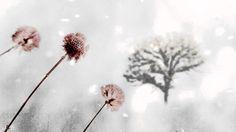 OST I'm Sorry I Love You - Snow Flower - Park Hyo Shin (눈의꽃 - 박효신)