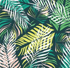 tropics...molly velte graham