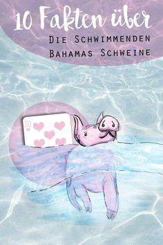 KuneCoco • 10 Fakten über die schwimmenden Bahamas-Schweine