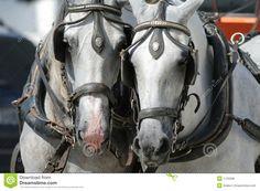 Best option transport one largw heavy horse