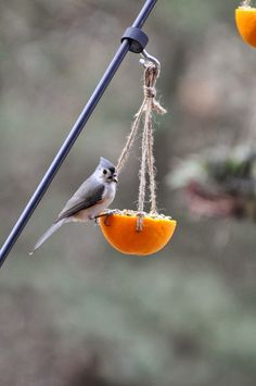 I'm preparing a class for the Master Gardener chapter that I'm a member of on making bird-feeders utilizing natural sources, recycled materi...