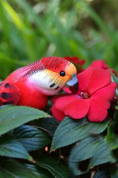 beautiful - ? parakeet