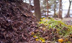 Green Master Project: Como elaborar compost de forma artesanal