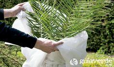 Protección de las plantas en invierno